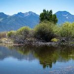 Wetlands on the Baca National Wildlife Refuge photo by Bill Ellzey